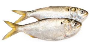 OmegaPure® Fish Oil